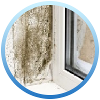 Dangers of Mold in Ann Arbor
