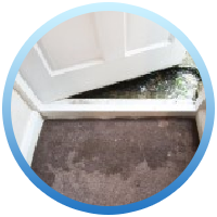 Wet moldy carpet from water damage