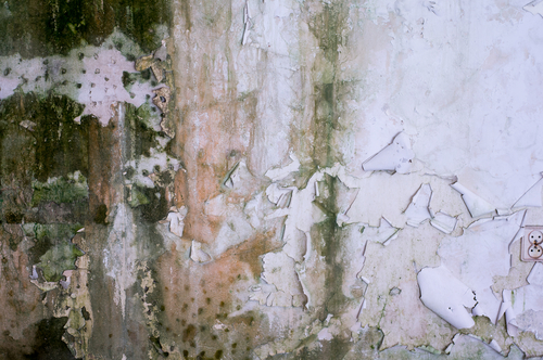 Severe Mold Damage in Grand rapids, MI